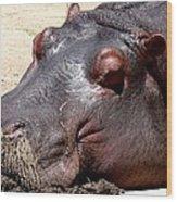 Muddy-faced Hippo Wood Print