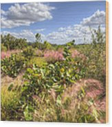 Muhly Grass And Sea Grape Plants Along A Florida Coastline Wood Print