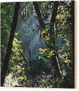 Muir Woods Wood Print