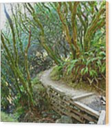 Curve In The Dipsea Wood Print