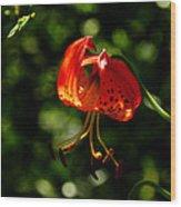 Muir Woods Leopard Lily 001 Wood Print