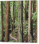 Muir Woods Wood Print by Niels Nielsen