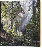 The Forgotten Path Wood Print