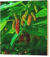 Mulberries - Fruit - Berries Wood Print