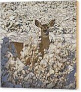 Mule Deer   #0061 Wood Print