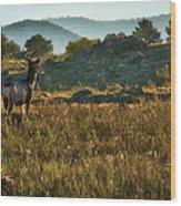 Mule Deer At De Weese Reservoir Wood Print