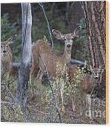 Mule Deer Doe With Fawns Wood Print