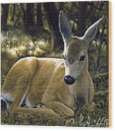 Mule Deer Fawn - A Quiet Place Wood Print by Crista Forest