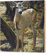 Mule Deer Fawn - Monarch Moment Wood Print
