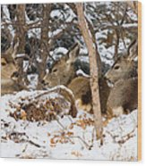 Mule Deer In Snow Wood Print