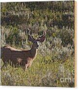Mule Deer In Velvet   #2114 Wood Print
