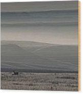 Mule Deer On The Prairies With Fog Wood Print