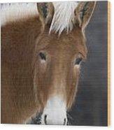 Mule Wood Print
