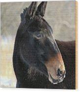 Mule Portrait 2 Wood Print
