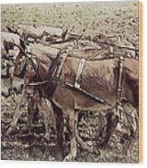 Mule Team Wood Print