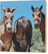 Mules On Alonissos Island Wood Print
