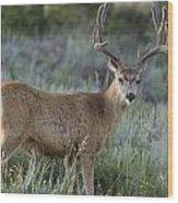 Muley Buck In Velvet Wood Print