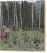 Mullein Meadow Garden Wood Print