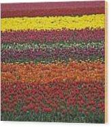 Mult-colored Tulip Field Wood Print