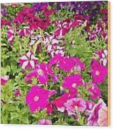 Multi-colored Blooming Petunias Background Wood Print