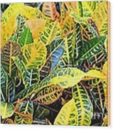 Multi-colored Croton Wood Print