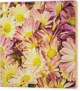 Multi-colored Daisies Wood Print