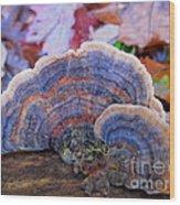 Multicolor Mushroom Wood Print by Joshua Bales