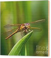 Multicolored Dragonfly Wood Print