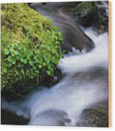 Munson Creek Flows Through The Forest Wood Print