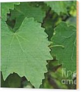 Muscadine Leaves Wood Print