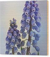 Muscari Wood Print