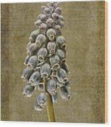 Muscari Armeniacum With Textures Wood Print by John Edwards