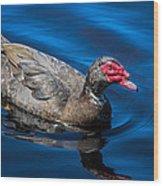 Muscovy Duck Wood Print