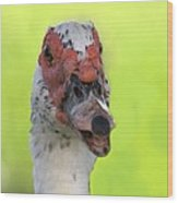Muscovy Duck Wood Print