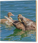Muscovy Family Wood Print