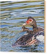 Muscovy Hen Wood Print