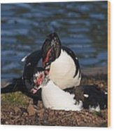 Muscovy Love Wood Print