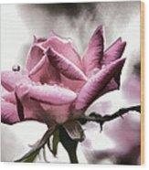 Museum Park Pink Rose Wood Print