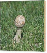 Mushroom 01 Wood Print