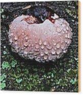 Mushroom 1 Wood Print