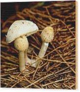 Mushroom 3 Wood Print