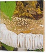 Mushroom Abstract # 2 Wood Print