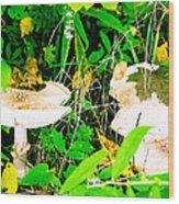 Mushroom Abstract # 3 Wood Print