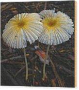 Mushroom Flowers Wood Print
