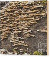 Mushroom Log Wood Print