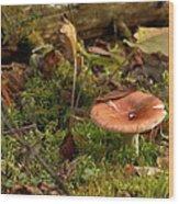 Mushroom N Moss Wood Print