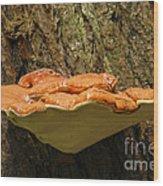 Mushroom Plate Wood Print