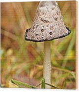 Shaggy Mane Mushroom Wood Print