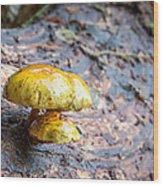 Mushroom Time Wood Print