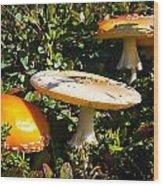 Mushroom Tops Wood Print